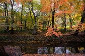 Autumn, South Korea — Stock Photo