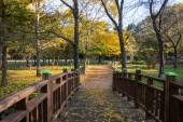 Autumn trees at parks in South Korea — Foto de Stock