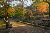 Autumn trees at parks in South Korea — Zdjęcie stockowe