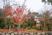 Gardens of the Tenryuji Temple in autumn. — Stock Photo