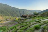 Terraced rice fields — Foto de Stock