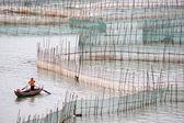 Crab farming in Xiapu County, China — Stock Photo