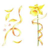 Watercolor narcissus, ribbons and petals — Stock Vector