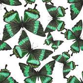 Patrón transparente con mariposas tropicales verdes — Vector de stock