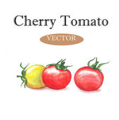 Hand drawn watercolor tomatoes — Stock Vector