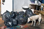 Garbage bags and white dog — Stock Photo