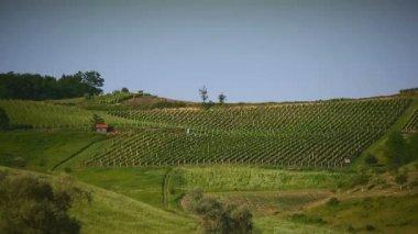 Vineyard on a hill in Croatia long shot — Vídeo de Stock