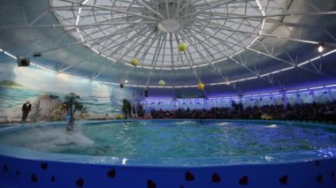 BELARUS, MINSK - 2014: Dolphins show in the dolphinarium — Wideo stockowe