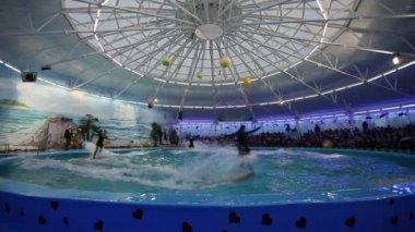 Belarus, Minsk - 2014: Yunuslar dolphinarium içinde göster — Stok video