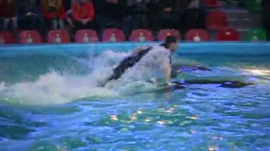 BELARUS, MINSK - 2014: Dolphins show in the dolphinarium — Stock video