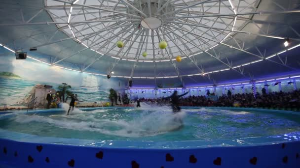 Bielorrusia, Minsk - 2014: Ver delfines en el Delfinario — Vídeo de stock