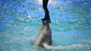 BELARUS, MINSK - 2014: Dolphins show in the dolphinarium — Stockvideo
