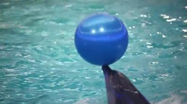 Dolphins show in the dolphinarium — Stockvideo