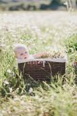 Cute little baby-boy sitting in a brown basket with chamomiles in a chamomile field — Stock Photo