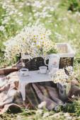 Summer picnic in a chamomile field on a sunny day — Stock Photo
