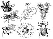Set of insects, flowers, doodle — Stock Vector