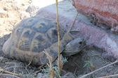 绿海龟在爱琴海岸 — 图库照片
