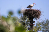 Bird flyer flier fowl birdie dickey — Stock Photo