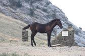 Horse dobbin hack hackney nag — Stock Photo
