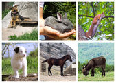 Set of animals — Stock Photo