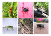 Set insects — Stock Photo