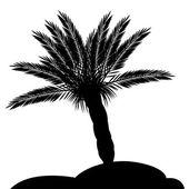 Palm silhouette — Vecteur