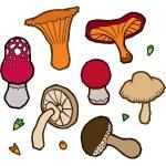 Edible mushrooms autumn — Stock Vector #62255171
