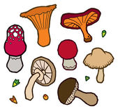 Edible mushrooms autumn — Wektor stockowy