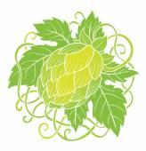 Green hops plant — Stock Vector