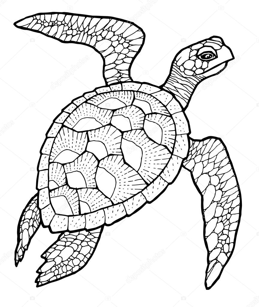 Line Art Vector : Sea turtle vector stylized drawing — stock