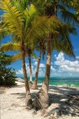 Palm beach. Palm trees on a beach, the sea. — Foto de Stock