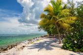 Palm beach. Palm trees on a beach, island in the Caribbean Sea. — Stock Photo
