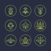 Vector Set of Thin Line Floral Design Elements for Logos — Stock Vector
