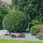 Ornamental trees — Stock Photo #52373335