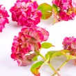 Flowers background — Stock Photo #53652797