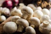 Mushrooms raw home-grown — Stock Photo