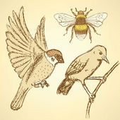 Sketch birds and bee in vintage style — Stock vektor