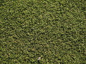 Soccer field grass on the green — Stock Photo