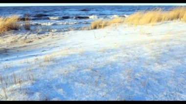 Dune scene with beach grass and snow along a Baltic Sea beach Riga — Stock Video