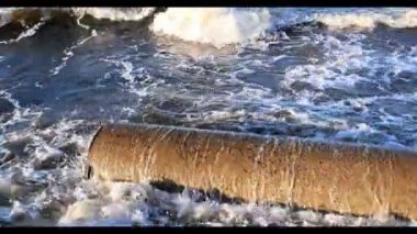 Ecology of the Baltic sea coast — Stock Video