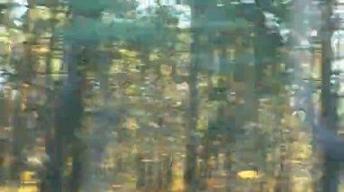 Niewyraźne samochód wycieczka w słoneczny jesień las drogi — Wideo stockowe