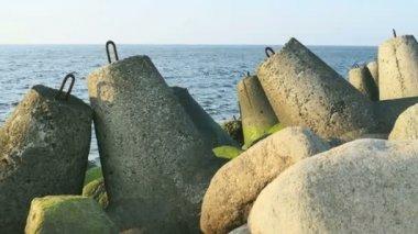 Green  sea grass n stones at Riga Beach in Latvia — Stock Video