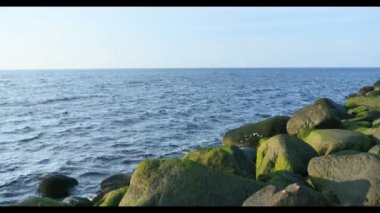 Green  sea grass n stones at Riga Beach in Latvia — Stock Video