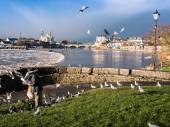 Seagulls over river ,Athlone dam in background — Stock Photo