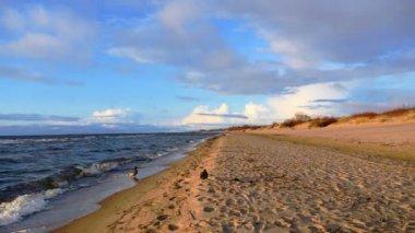 Beautiful ducks at the Baltic sea beach — Stock Video