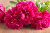 Red peonies flowers  — Stockfoto