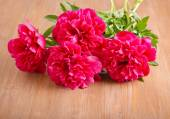 Red peonies — Stock Photo