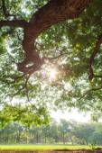 The tree landscape — Stock Photo