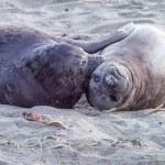 Two Sea Lions — Stock Photo #62926187