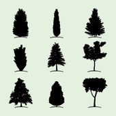 Silhouettes of coniferous trees — Stock Vector